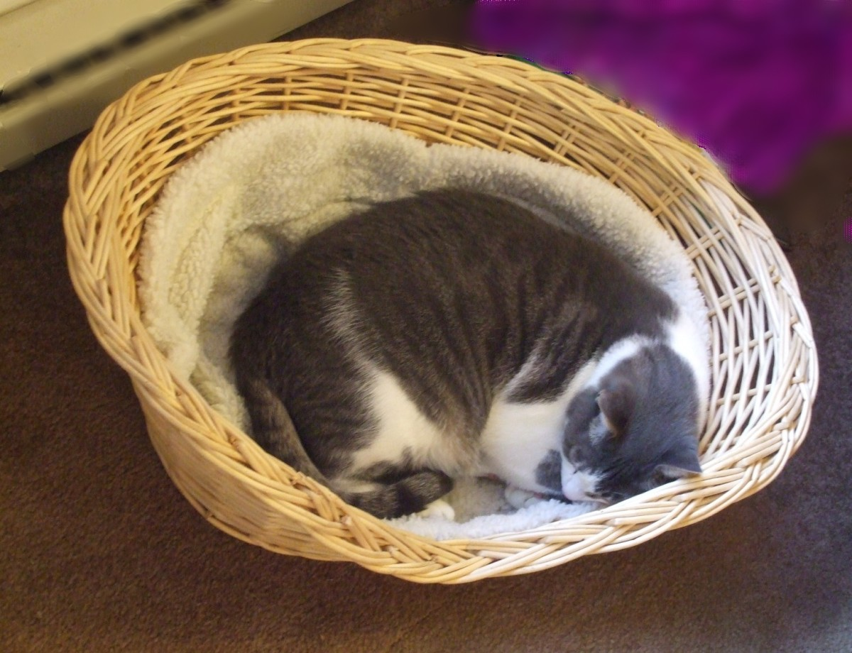 This was his bed as a newborn kitten and he stills returns for comfort.