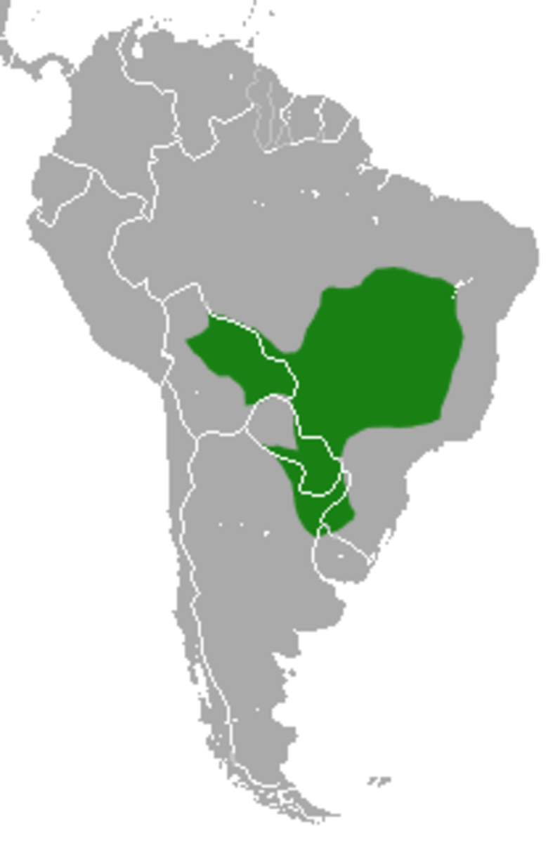 Location of the Black Howler Monkey