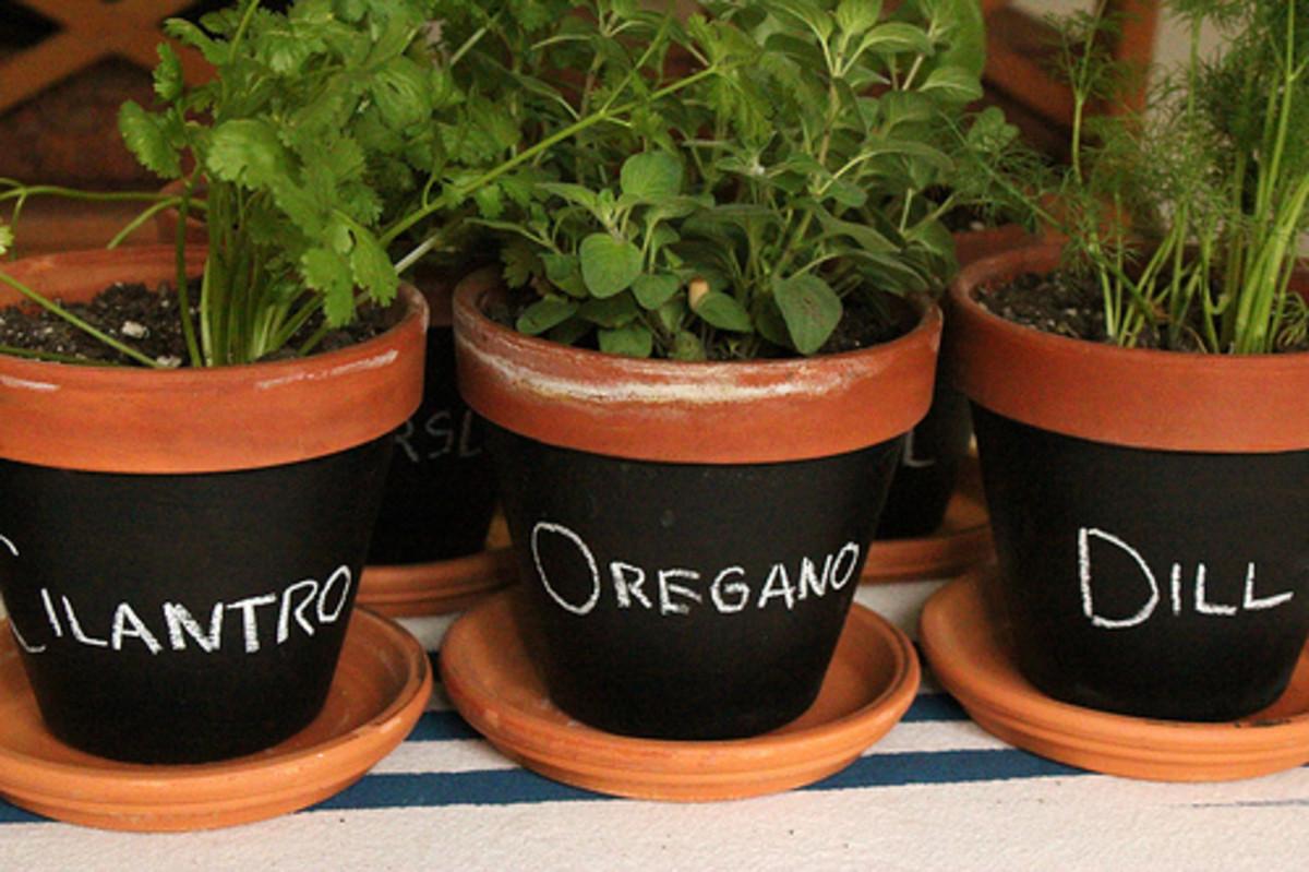 Chalkboard Pots for Herbs