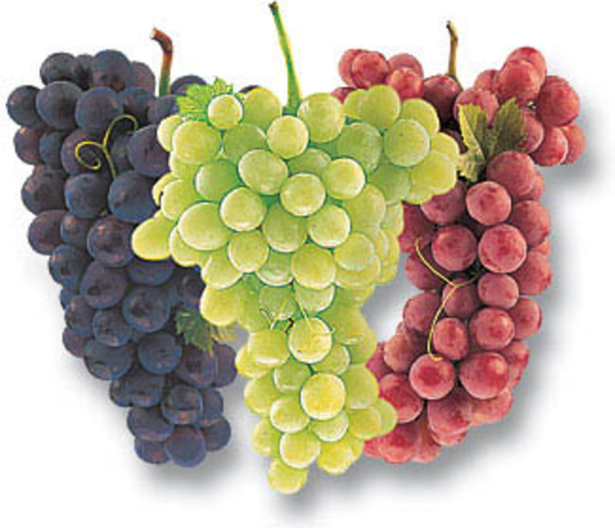 Different Colored Grapes-- Purple, Green and Red