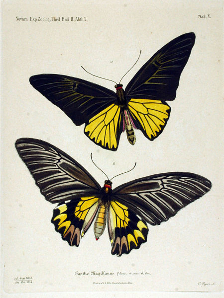 Protected species of butterfly on Lan Yu.