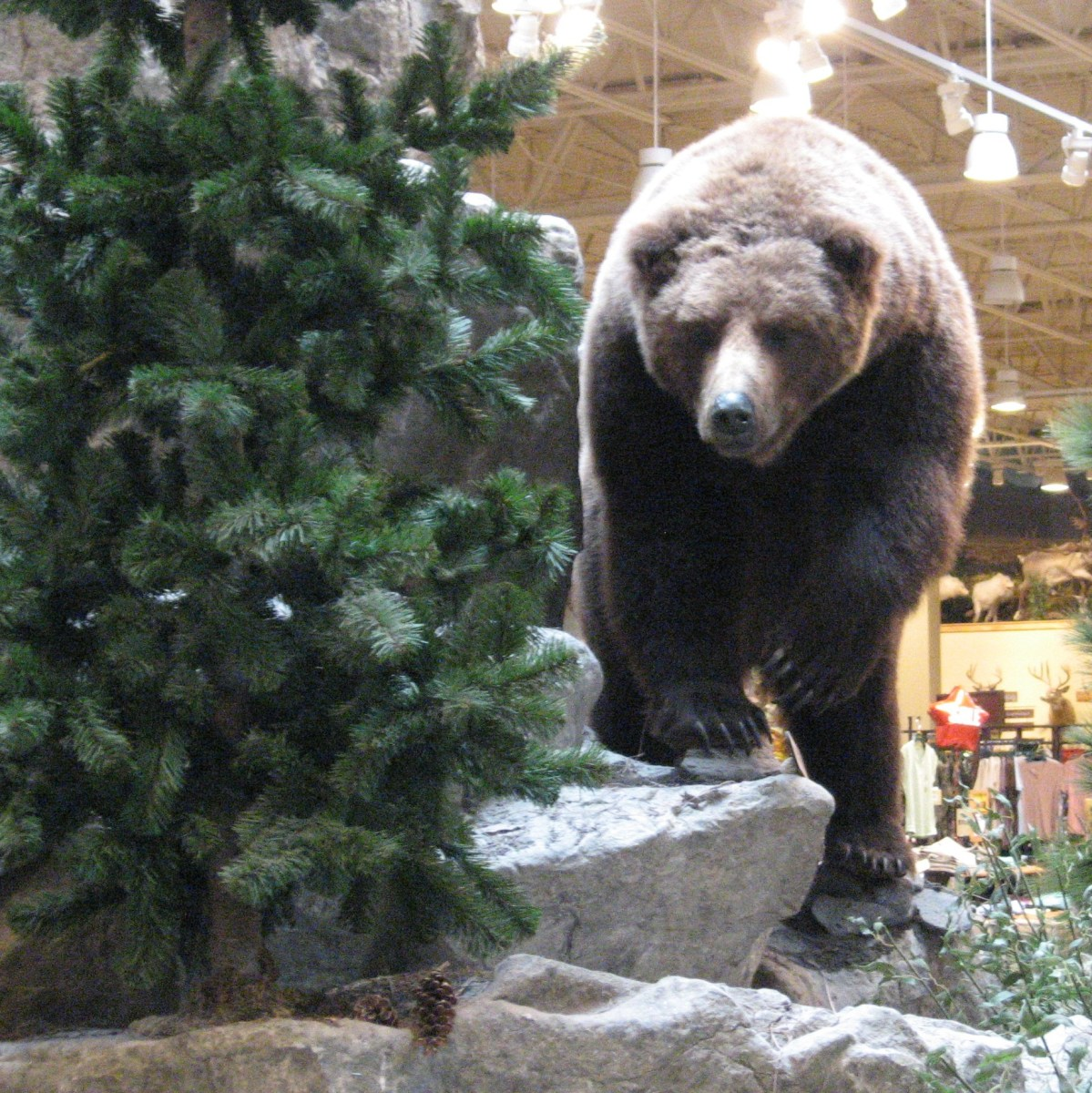 Actually this bear is at a Cabella's store, so is unlikely to attack anyone.