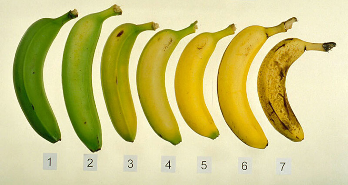 Eating bananas that are almost ripe (see the 4th banana) can cause constipation as they contain a lot of starch.