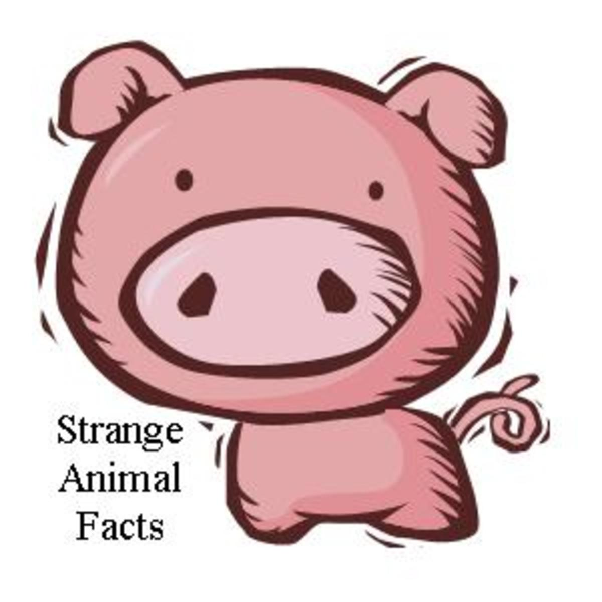 Strange and Interesting Animal Facts