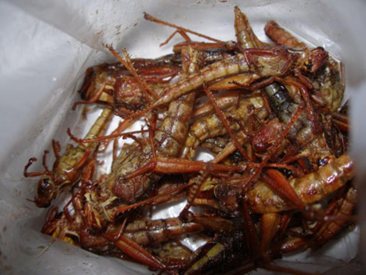 deep fried grasshoppers