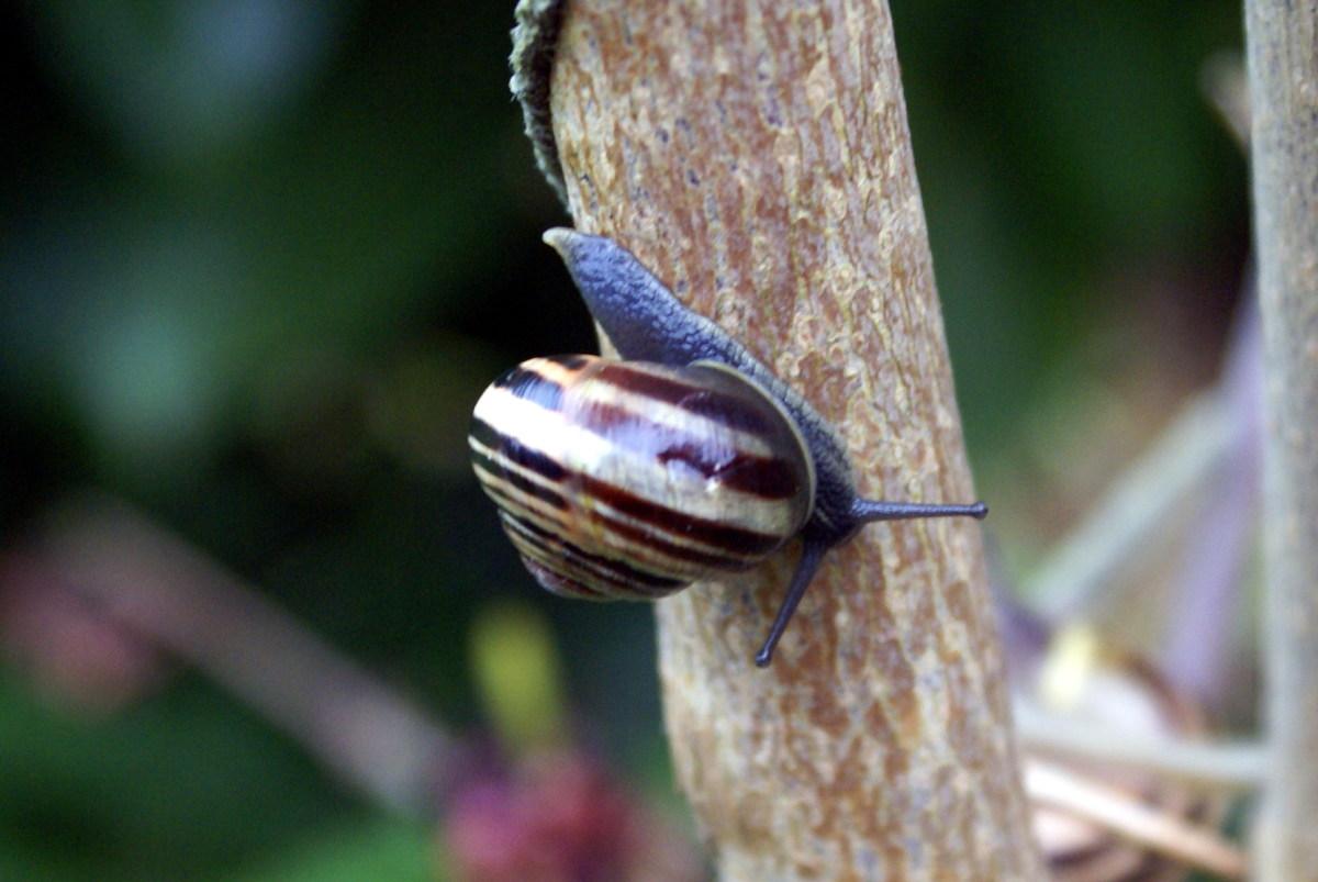 Tiny, tiny snails