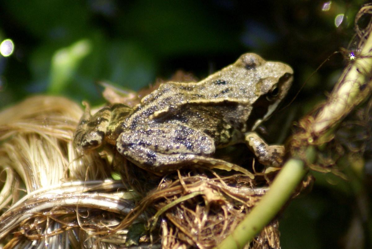 Little glittery frog