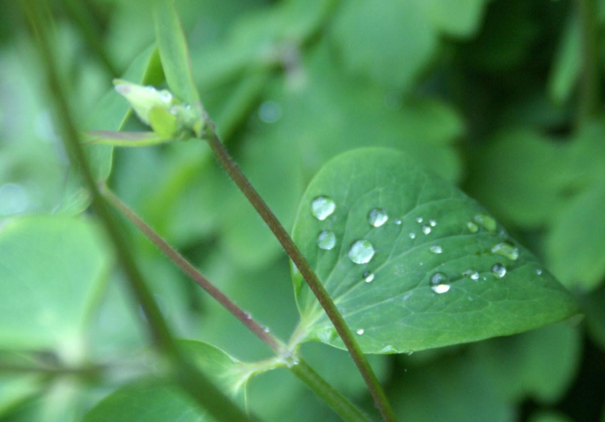 Captured morning raindrops