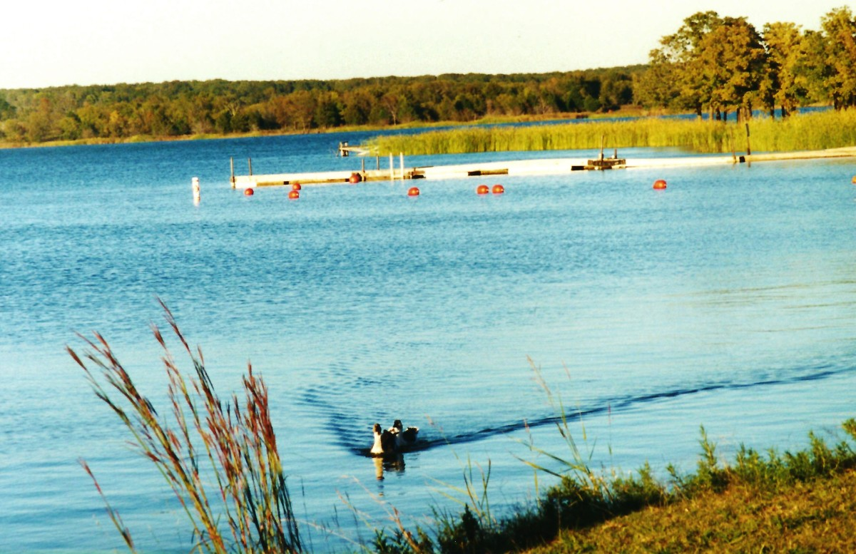 Lake Murray State Park - Notice the geese swimming up towards us?