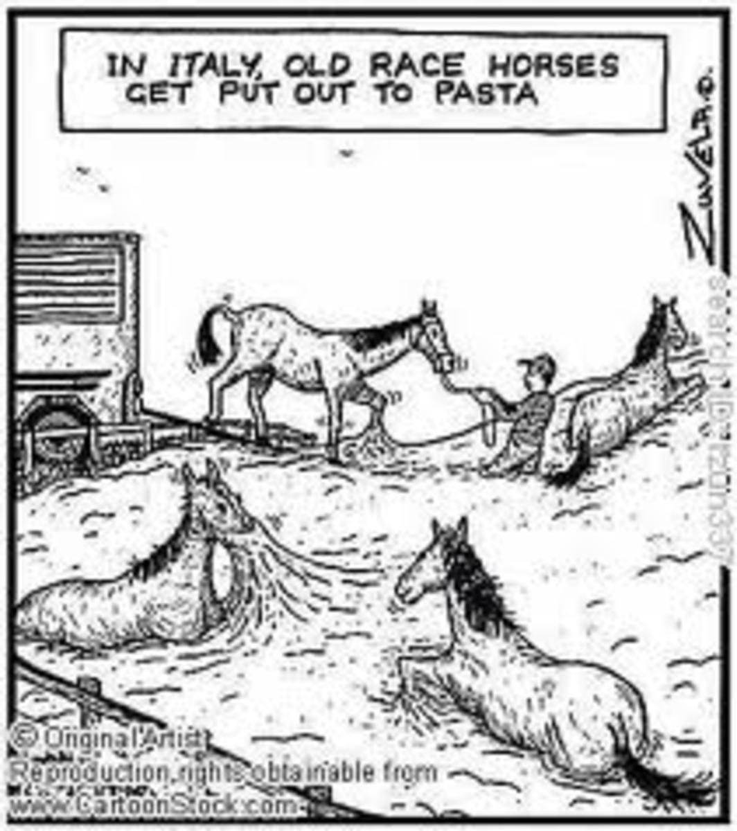 horse-facts