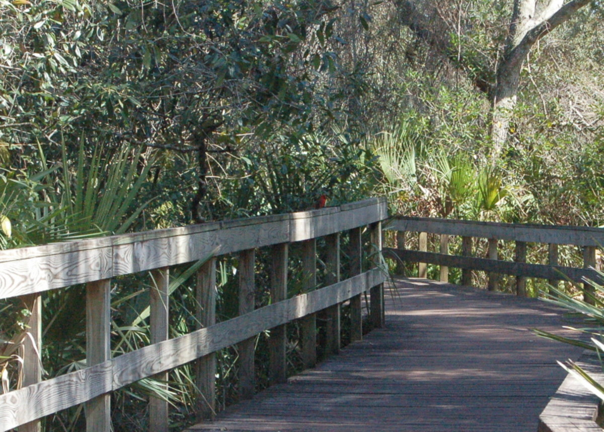 nature walkway at Turkey Creek