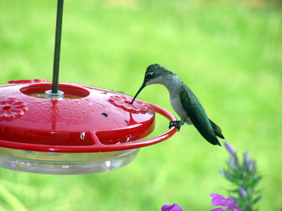 Hummingbird at a feeder | Tererro General Store