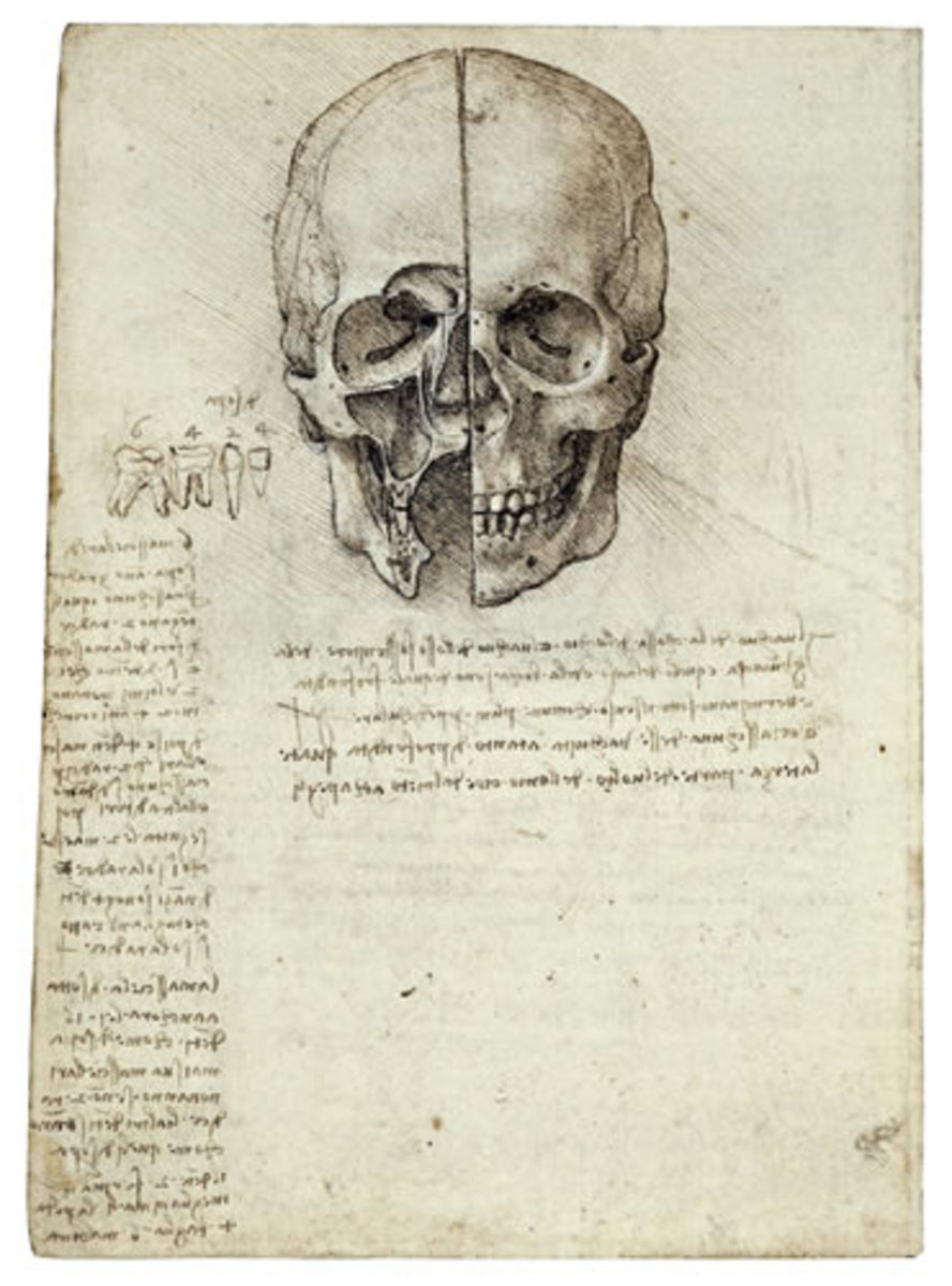 Da Vinci studied anatomy in order to perfect his art and sculptures in medical schools and dissection theatres