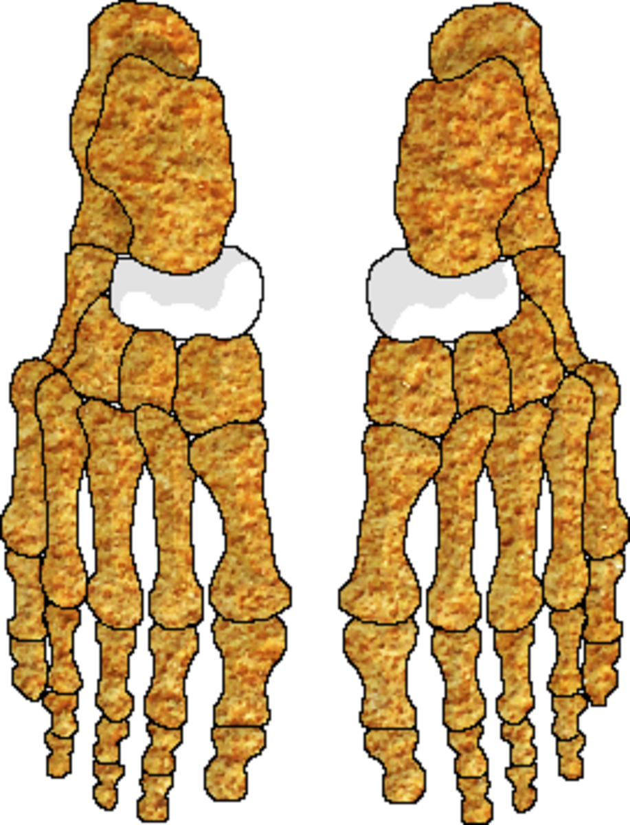 The navicular bones