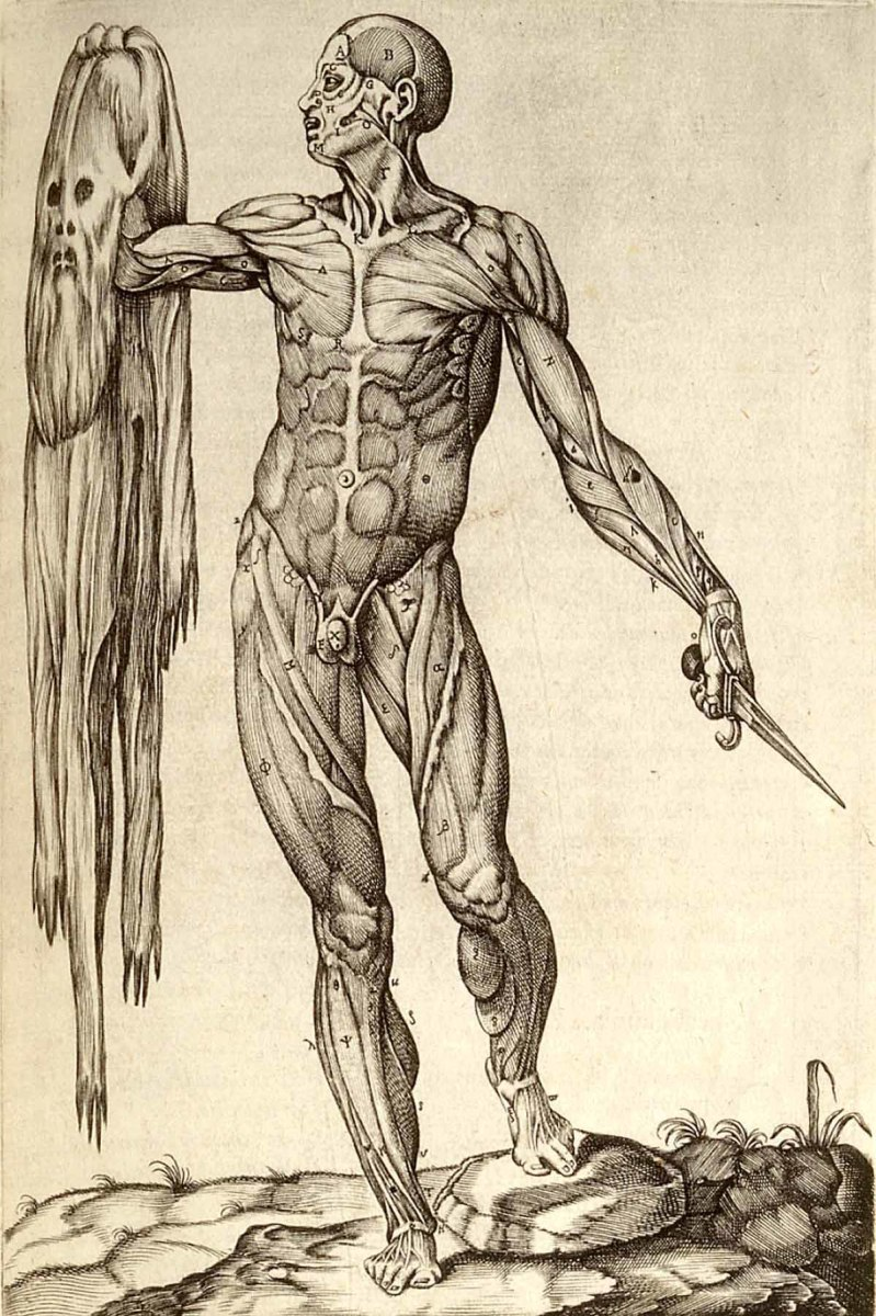 Vesalius revolutionized anatomy with his definitive De humani corporis fabrica . It is said to be illustrated by  Titian's pupil Jan Stephen van Calcar.