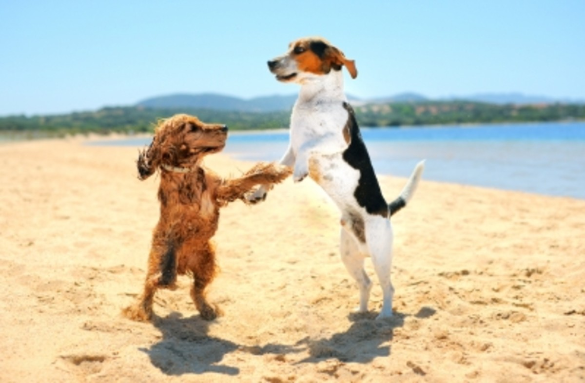 Useful Tips on Flying with a Pet Dog