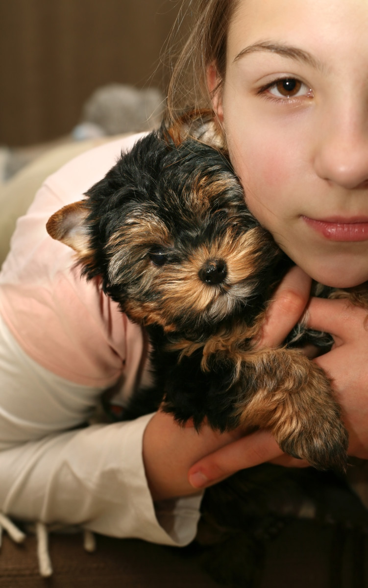 Yorkshire terrier puppies are adorable!