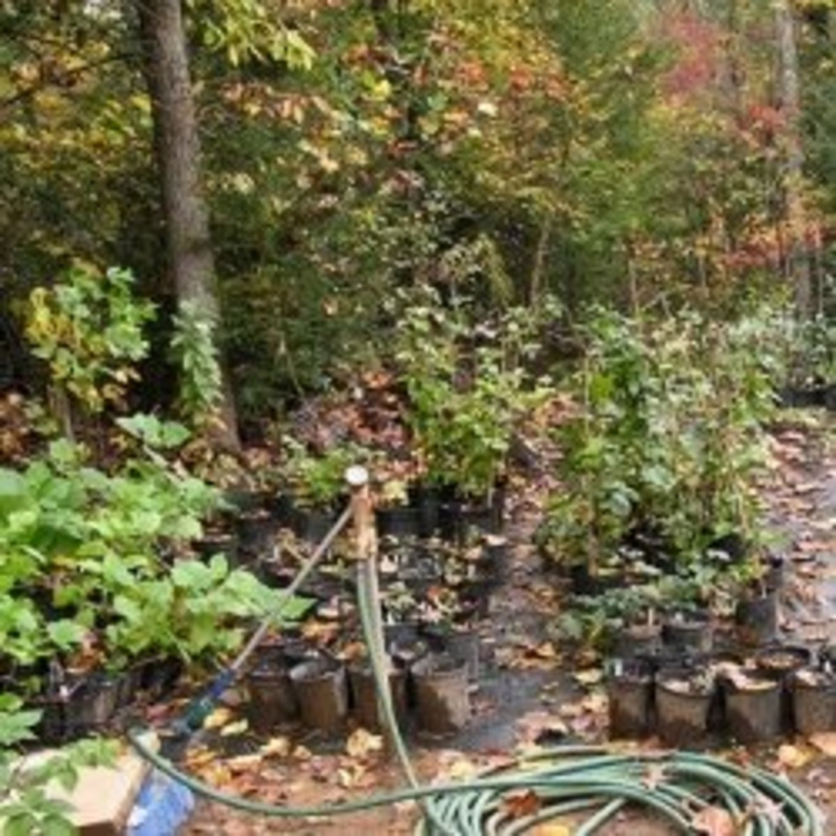 State Forest Nursery