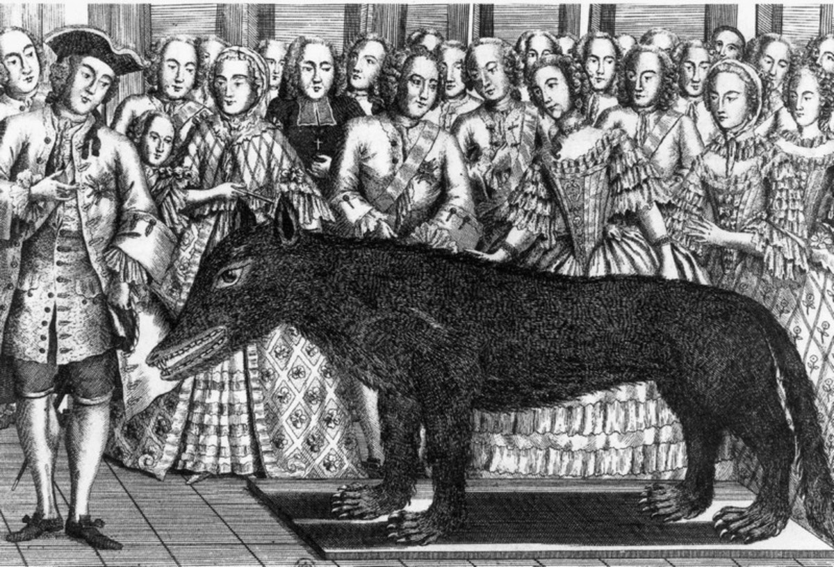 Periods illustration of the Wolf of Chazes presented Louis XV in 1765