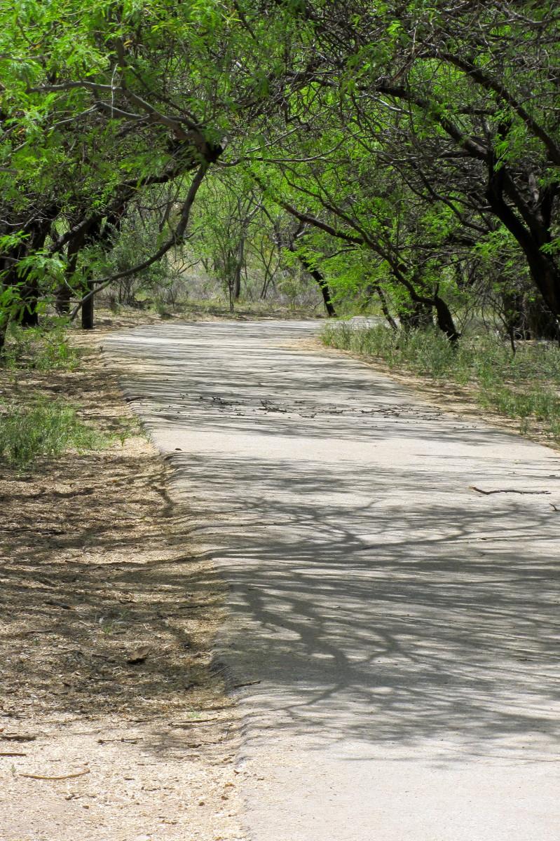 Agua Caliente trail behind main pond