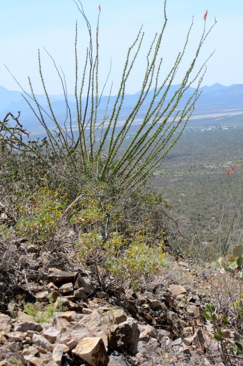Gates Pass: Tucson Mountain Park
