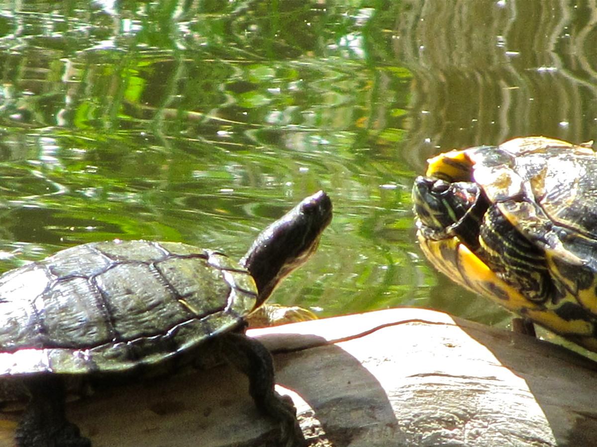 Agua Caliente critters