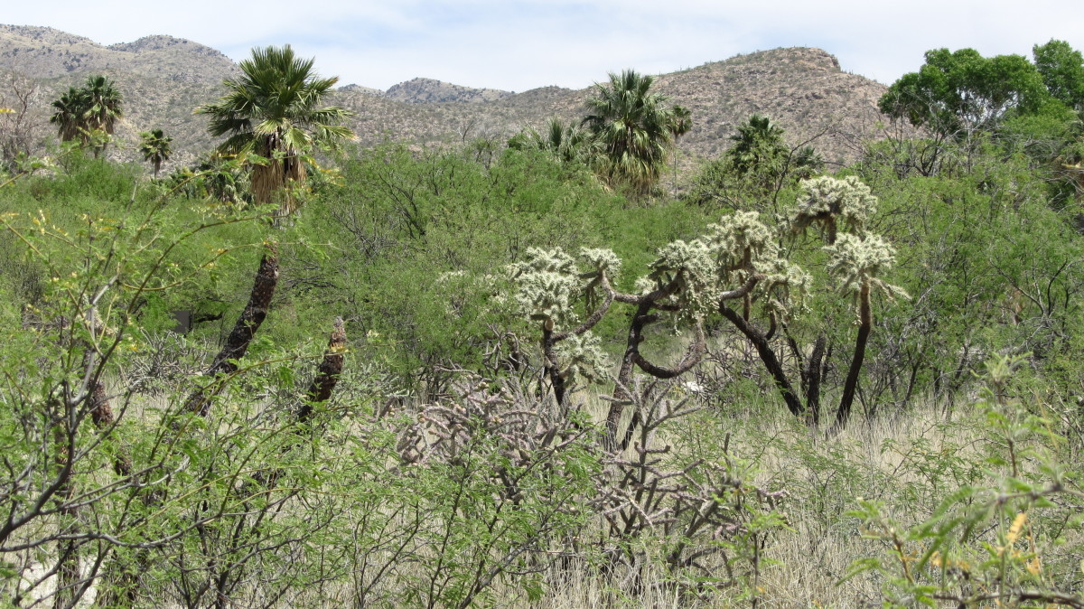 Agua Caliente area near seasonal ponds