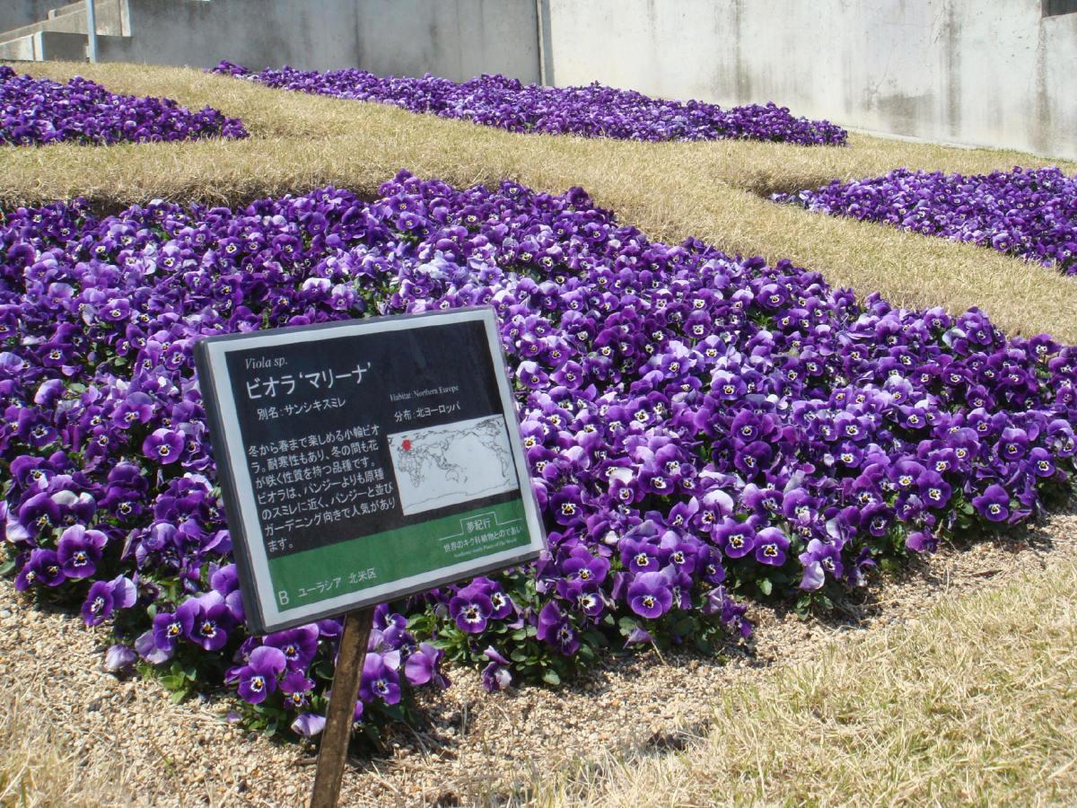 japan-awaji-yumebutai-tadao-ando
