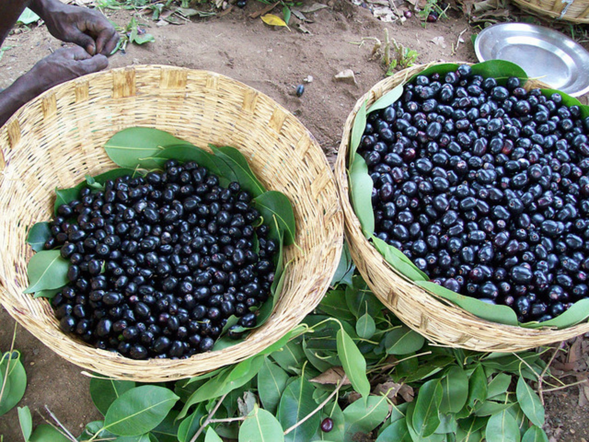 ripe jamun fruit for sale