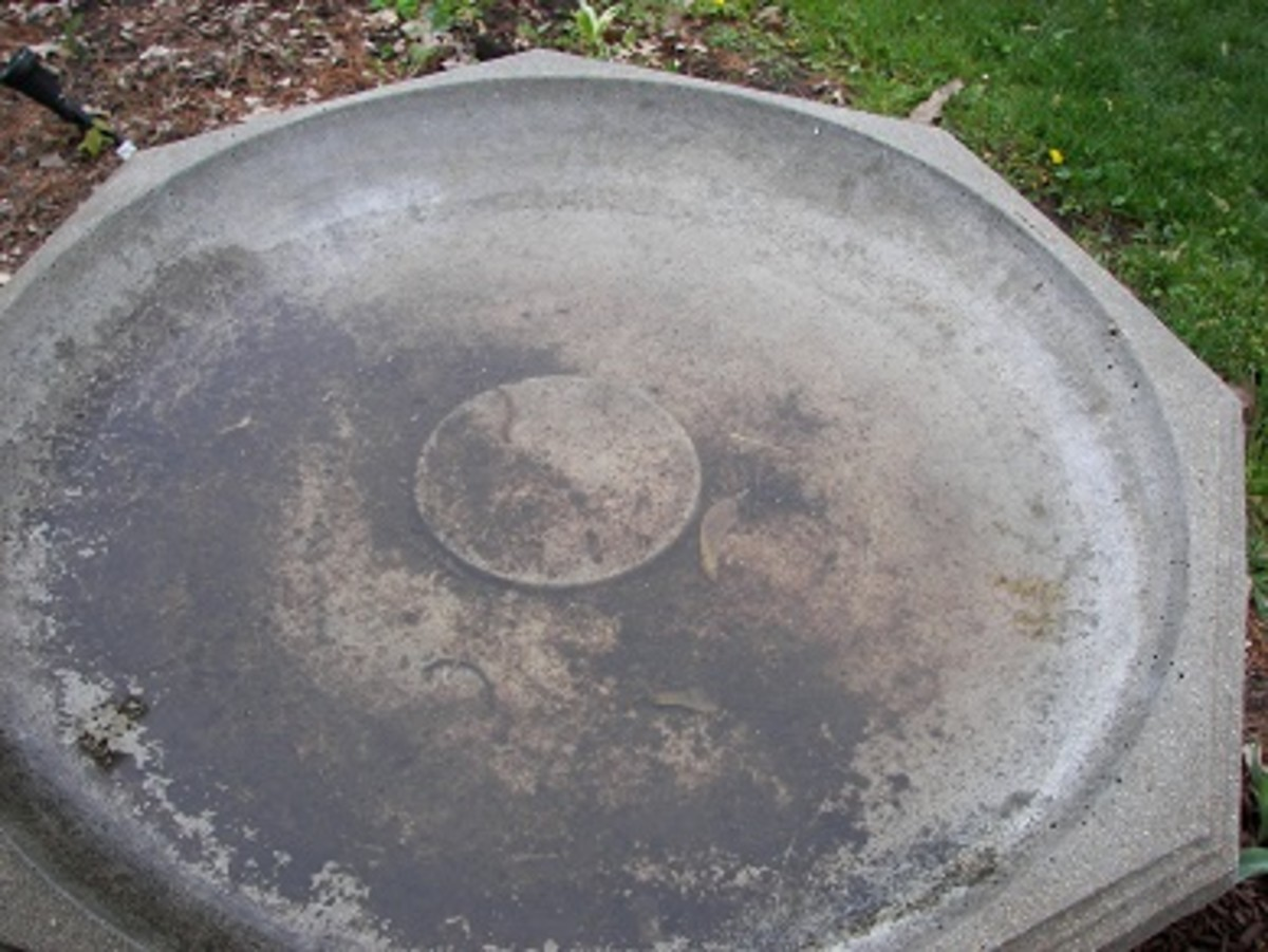 Bird Bath Test - Half Cleaned with Electrolyzed Water - An All Natural Sanitizing Solution