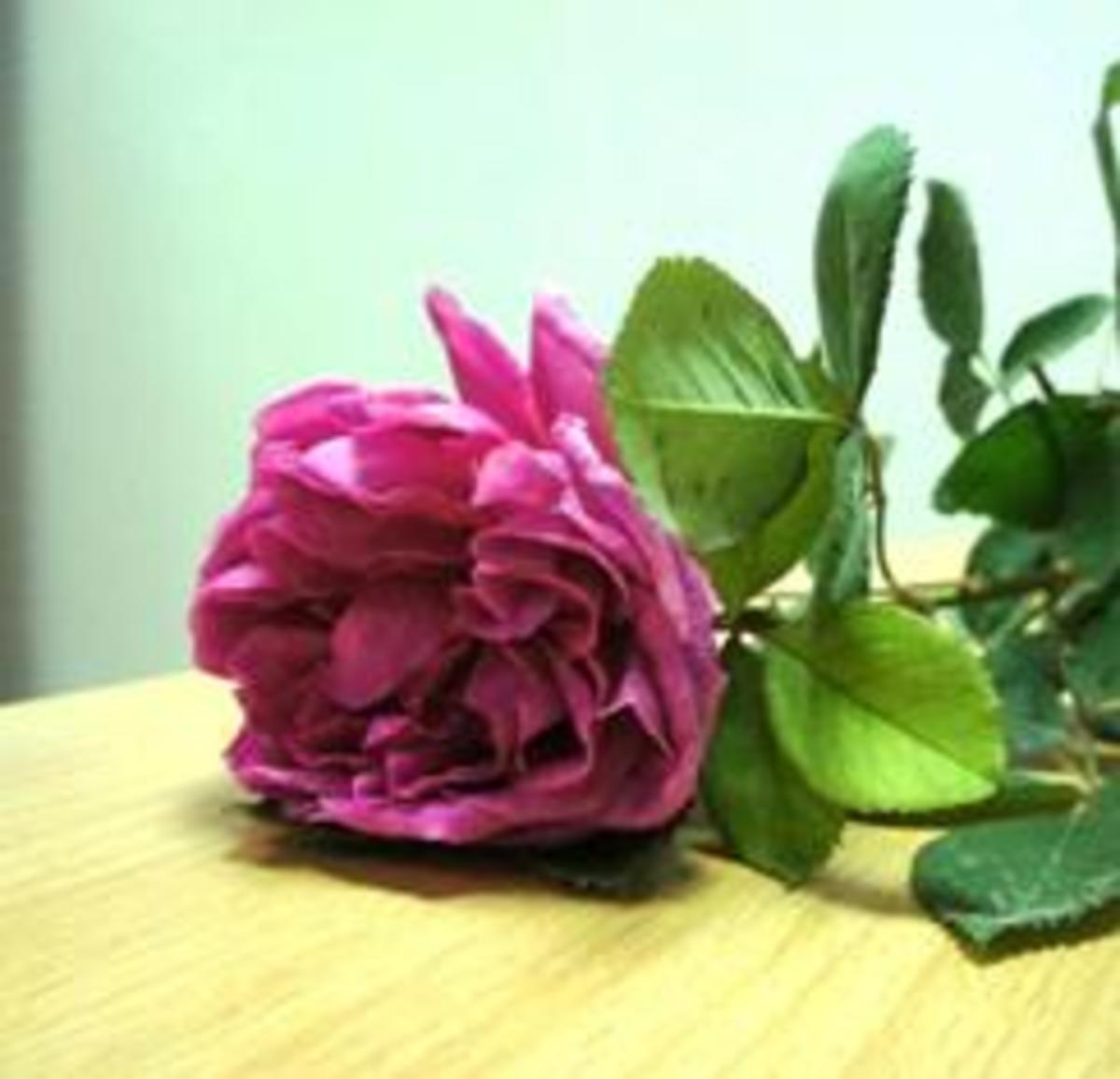 How to Grow Roses from a Stem Cuttings