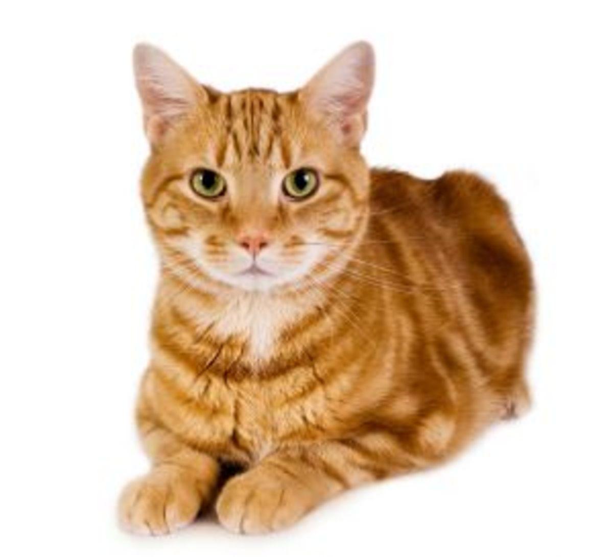 Best Cat Repellent Plants