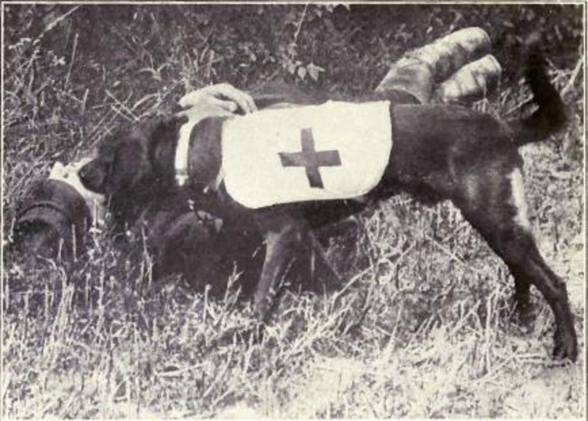 Ambulance dog finding wounded