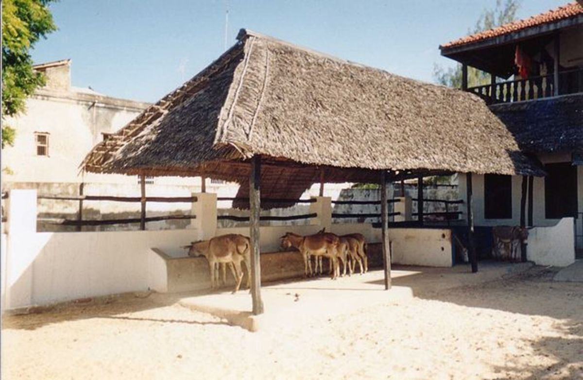 Lamu donkey sanctuary