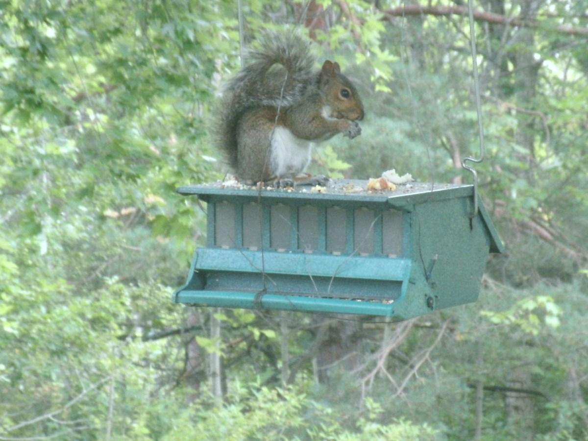 My squirrel proof feeder