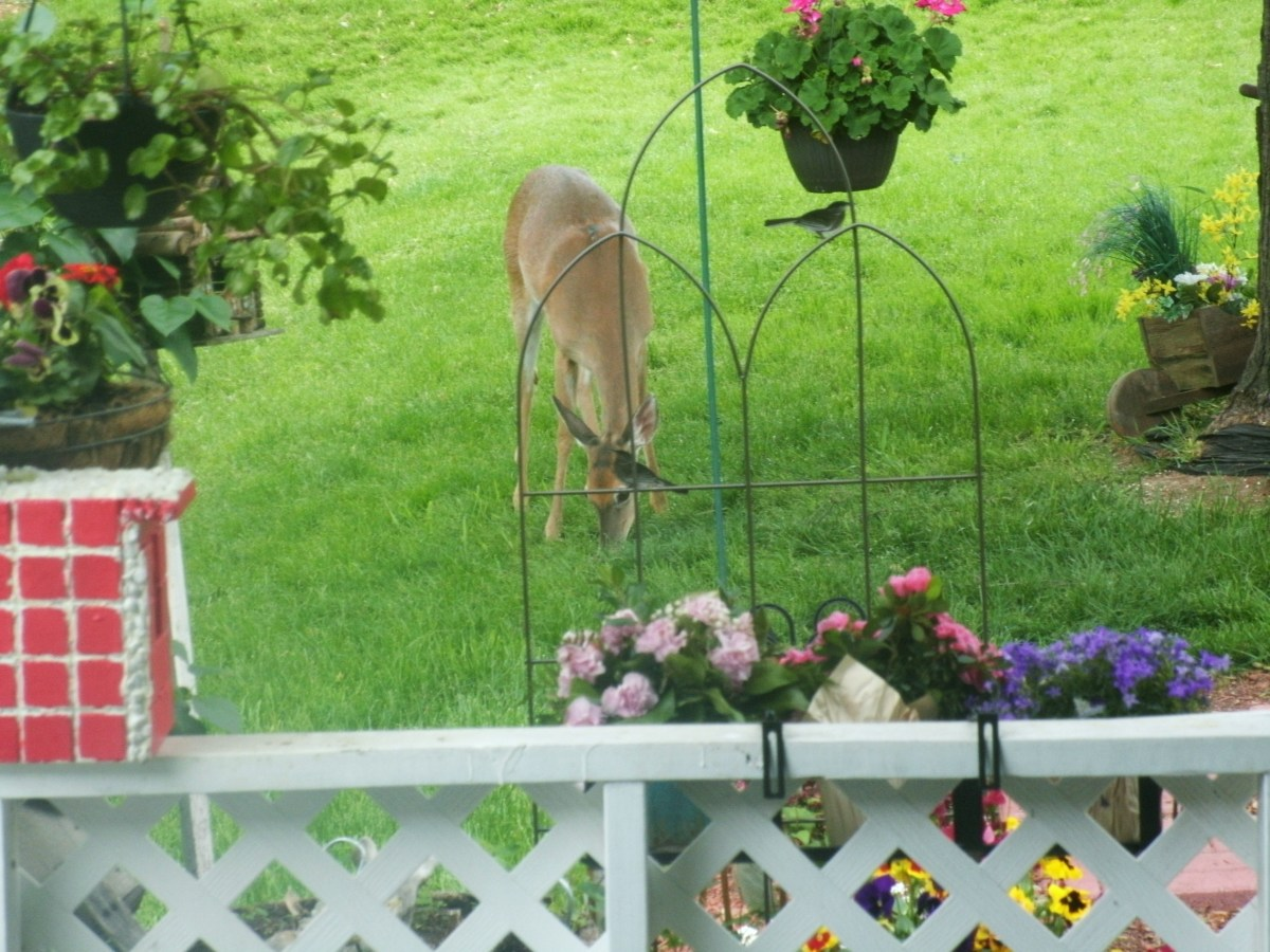 Flowers, Birds, Deer and Sweet Serenity