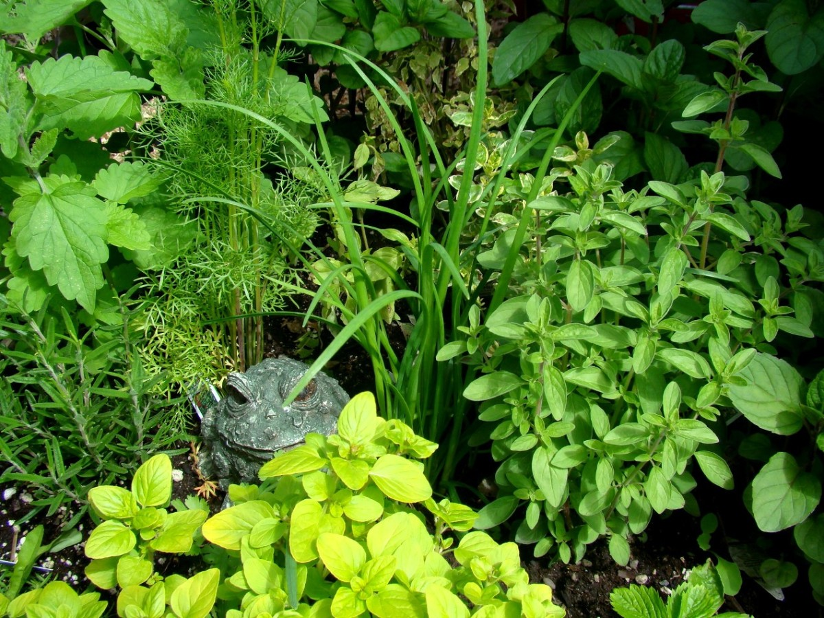 Mint, cilantro, thyme, garlic chives, basil and rosemary.