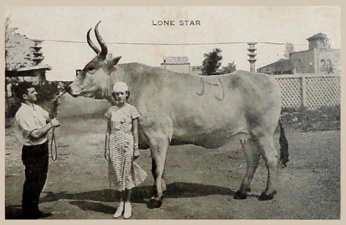 Lone Star at 9 years of age, shown with her owner, Miss Jeanne Maulsby.