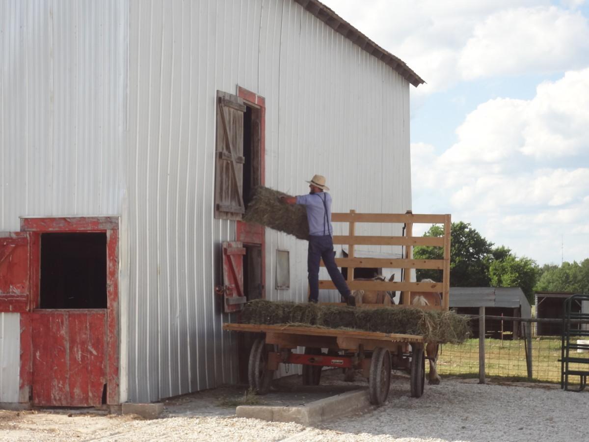 Amish boy bailing hay.