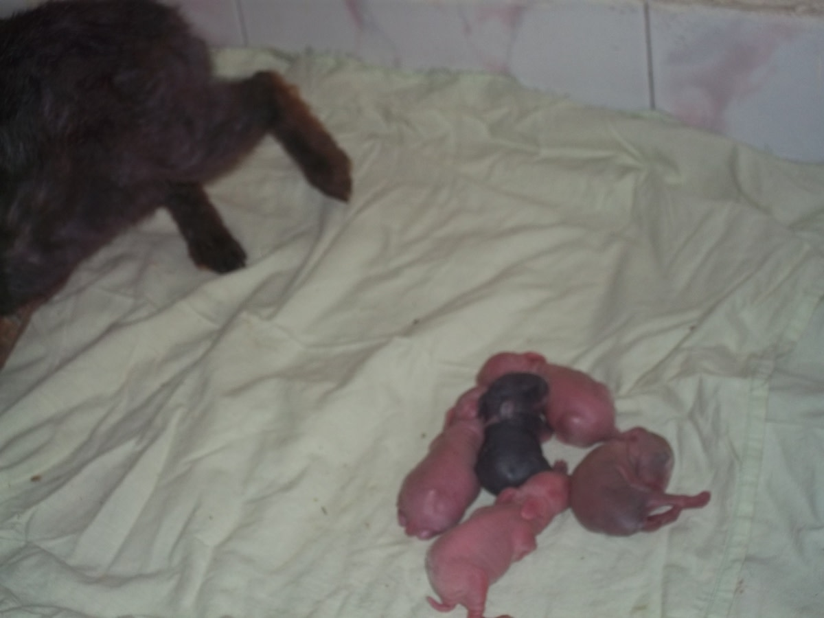 Mikki gave birth to 5 kits. We did not know their sex. They were not looking like rabbits.