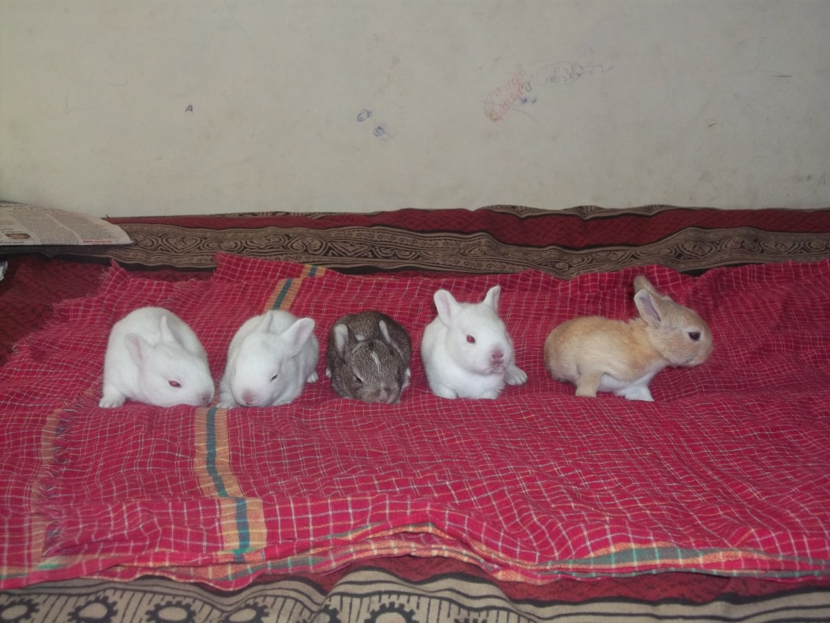 After around 25 days of their birth. They had now furs and long ears. They were so beautiful.