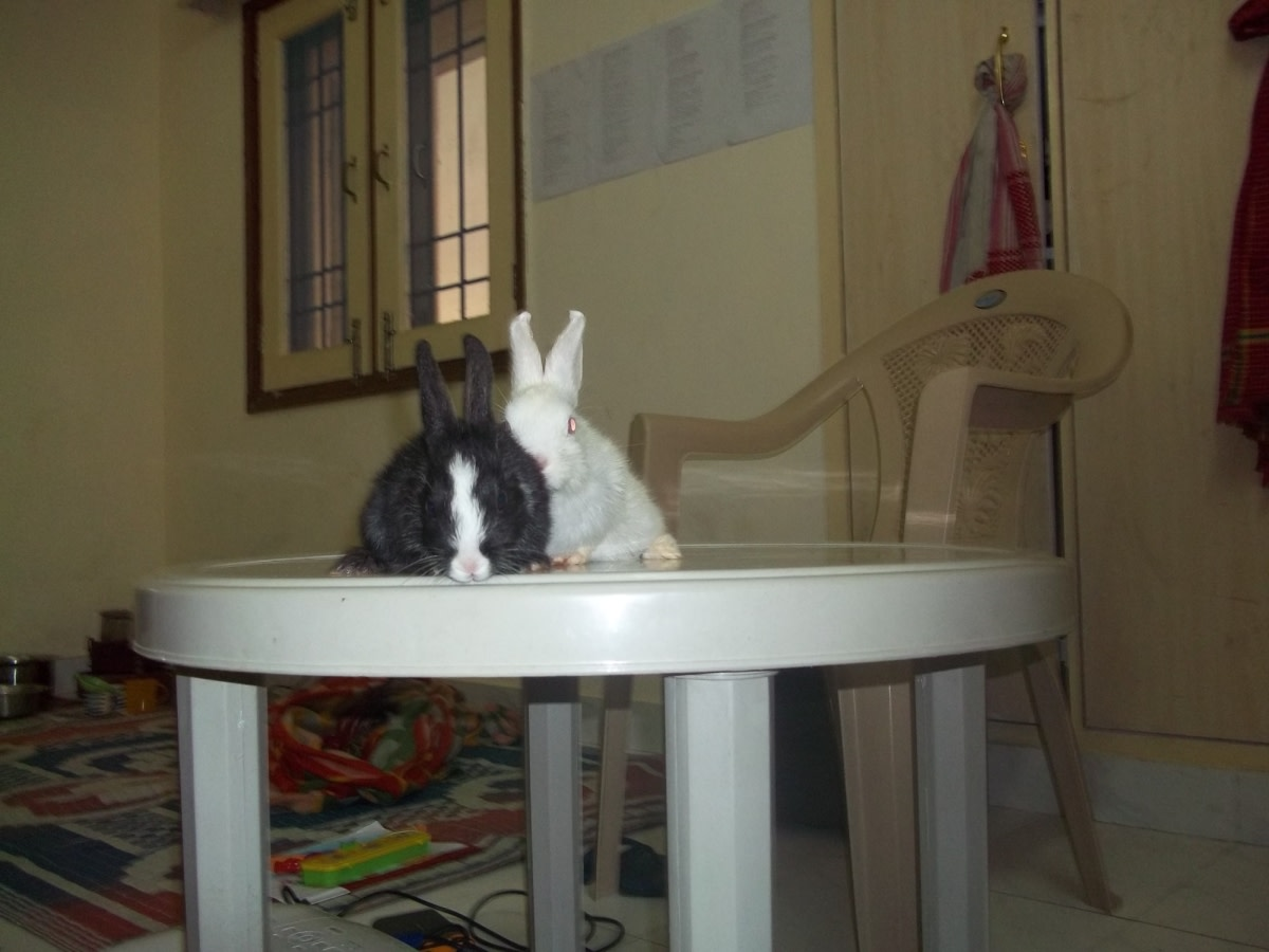 on-pets-an-account-of-rabbit-keeping-at-home