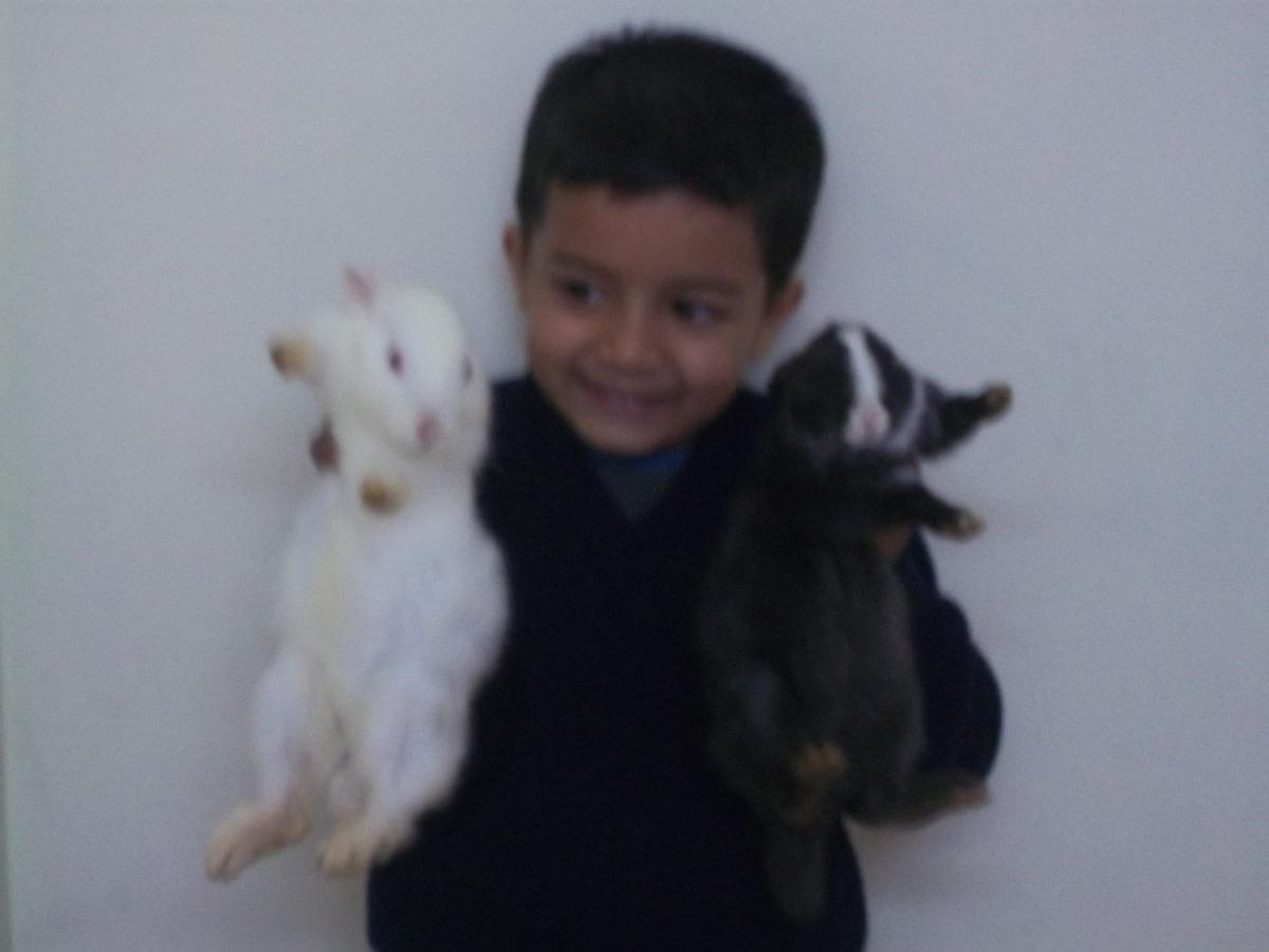 My son with Chikki and Mikki.