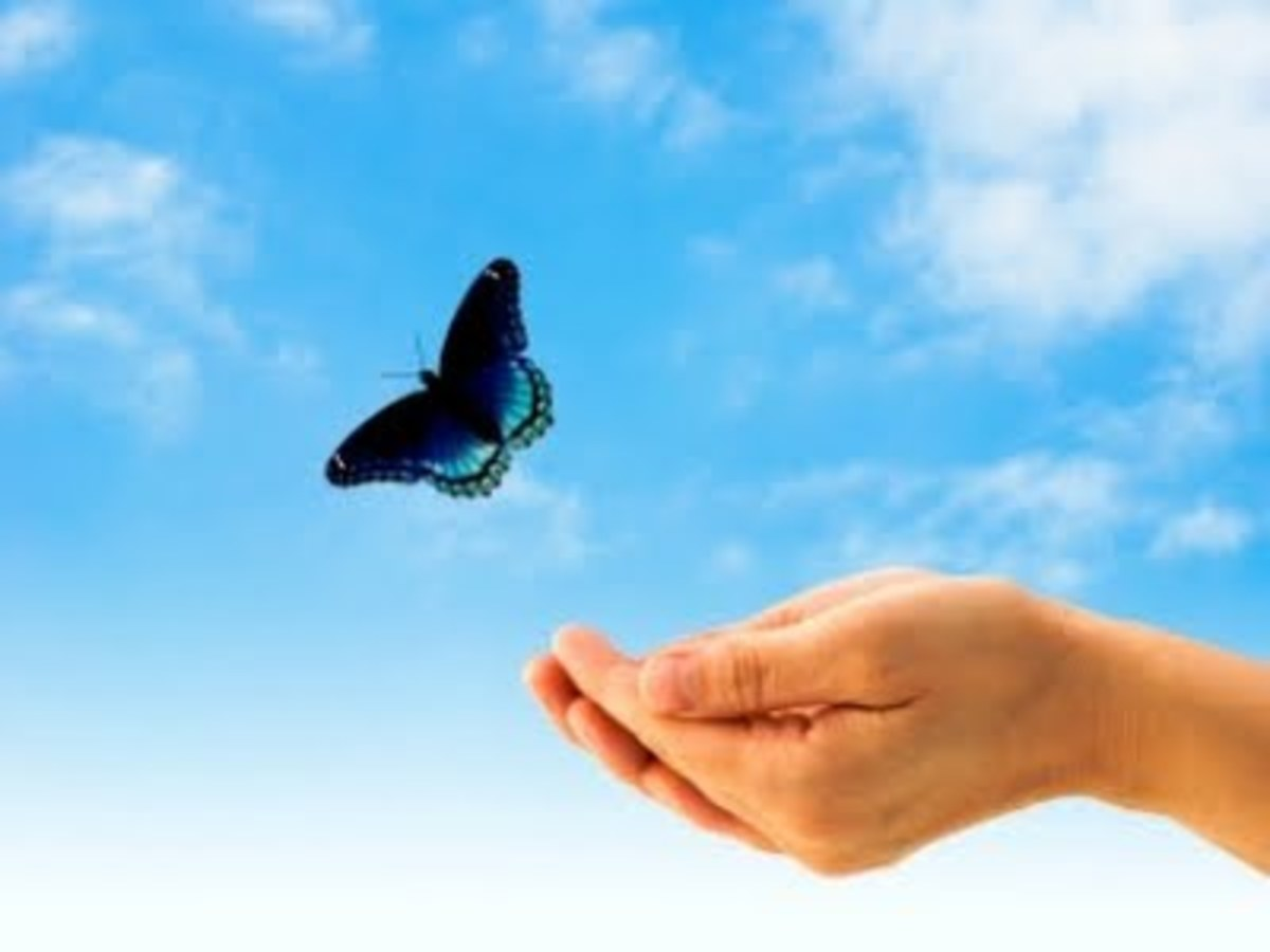 The Butterfly and its Symbolic Meaning