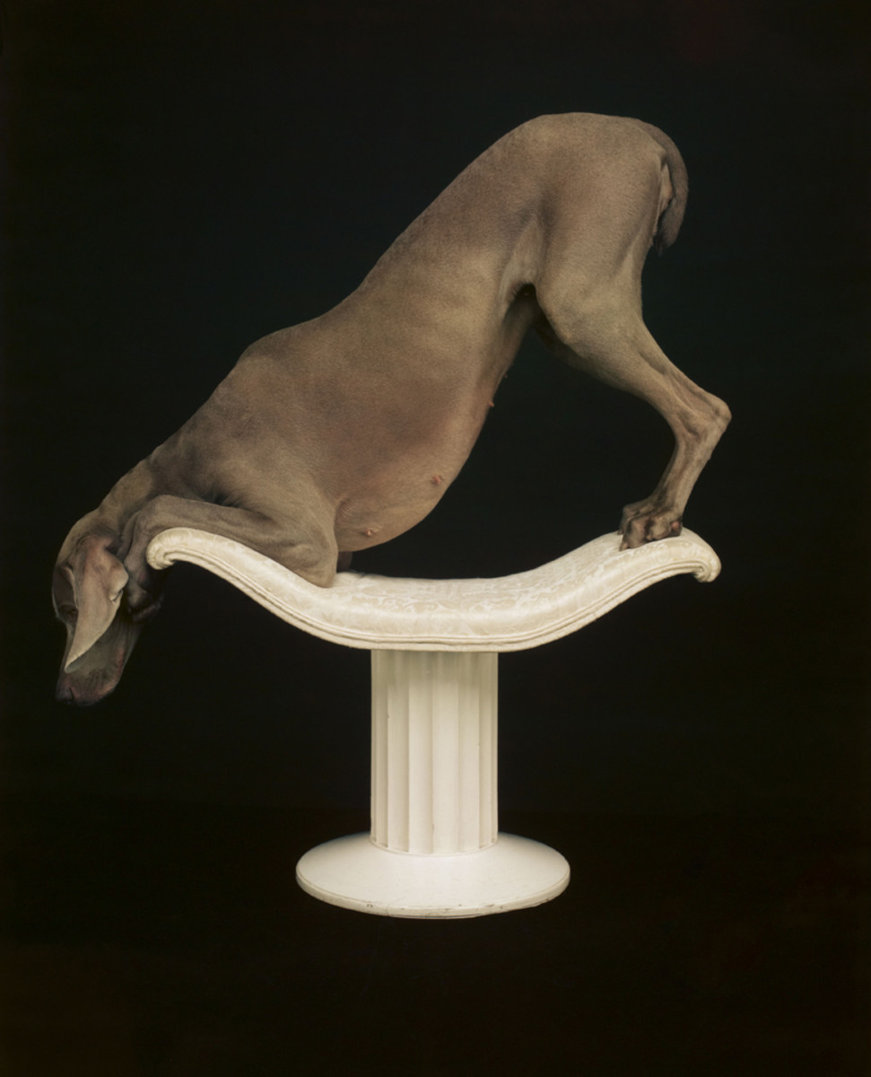 Another William Wegman.