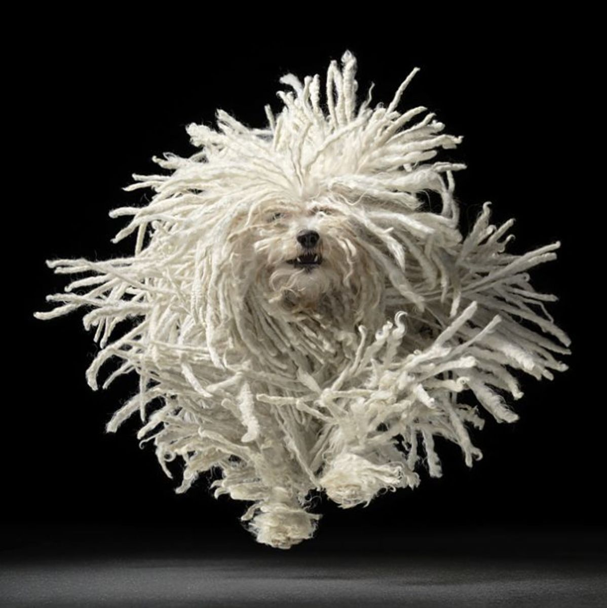 And yet another Tim Flach...