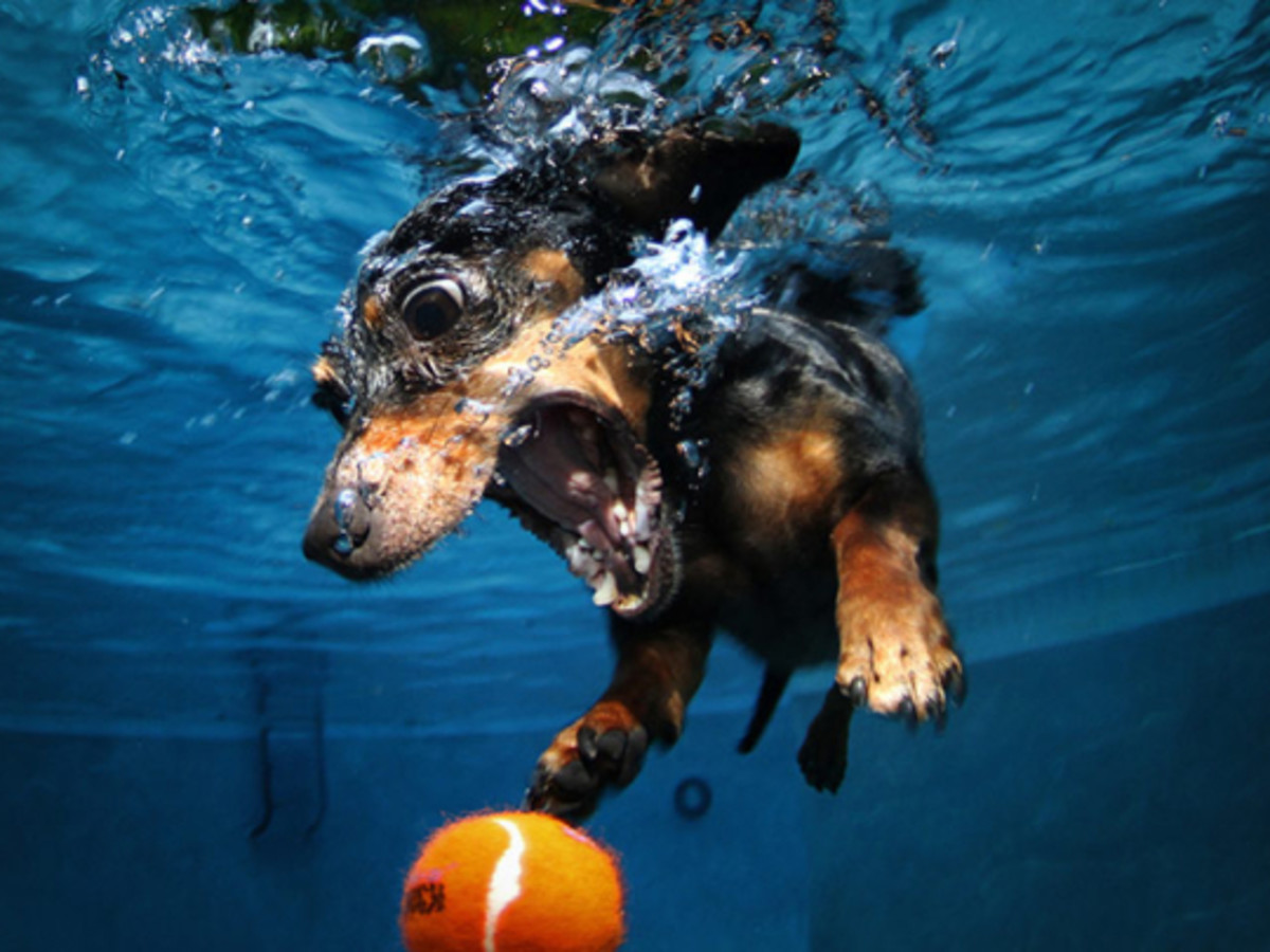 Seth Casteel has an affinity for underwater dog photos.