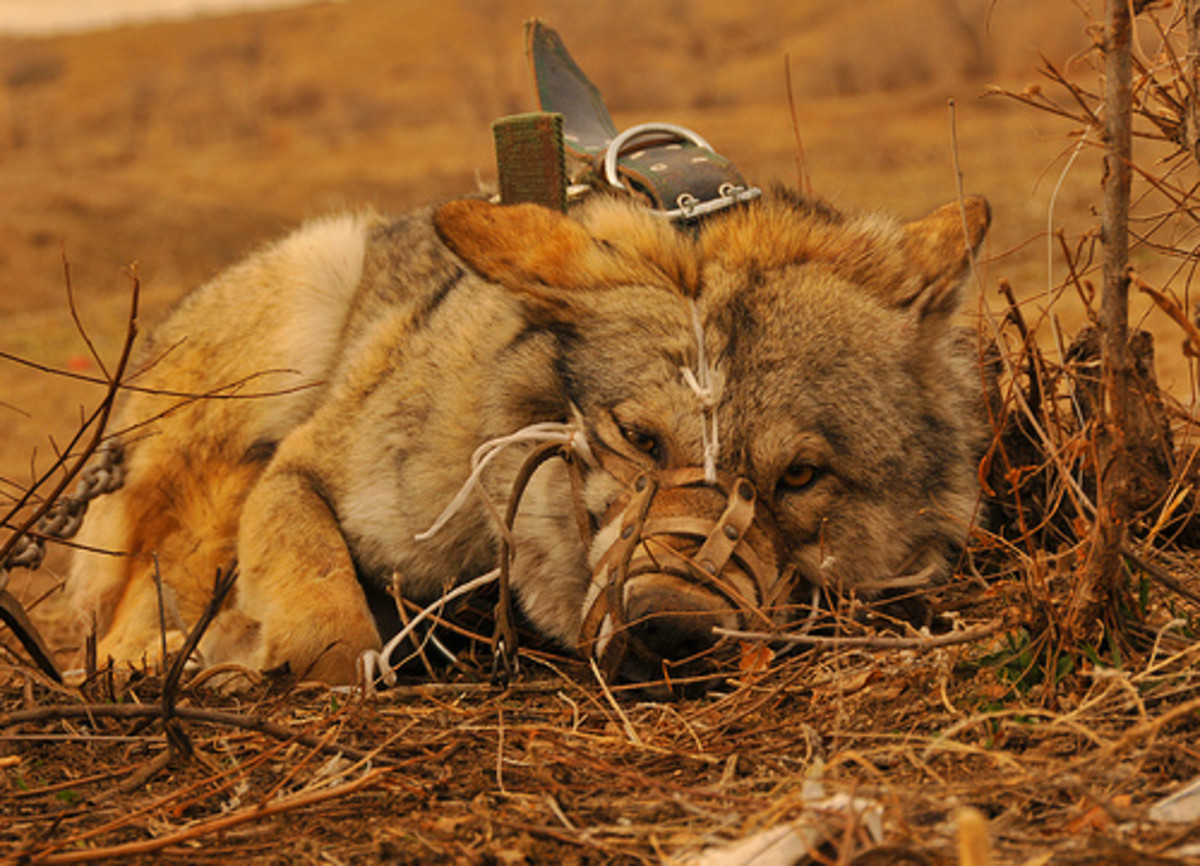 This image is terribly sad, and serves as a reminder that wild canines still need our support.
