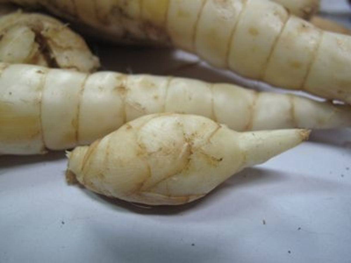 root from which powder is extracted