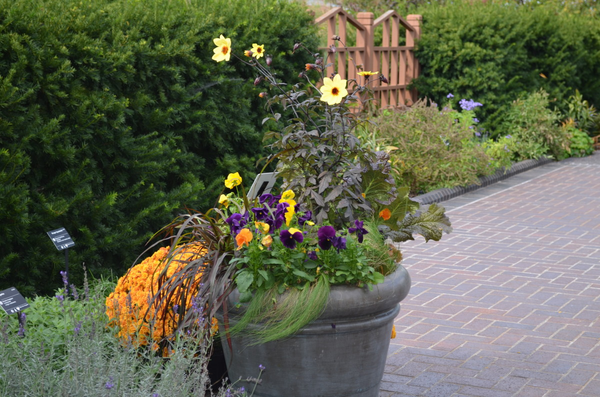 Photo 5 - Showing how you can use different plant heights in pots for appeal.  This was a windy day you can tell!